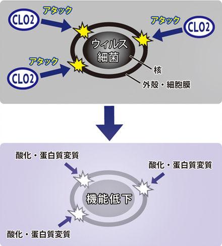 二酸化塩素の除菌メカニズム